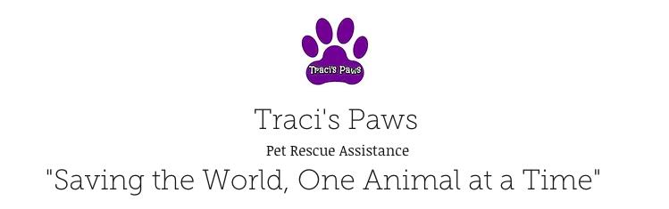 traci's paws logo fundraising bracelets