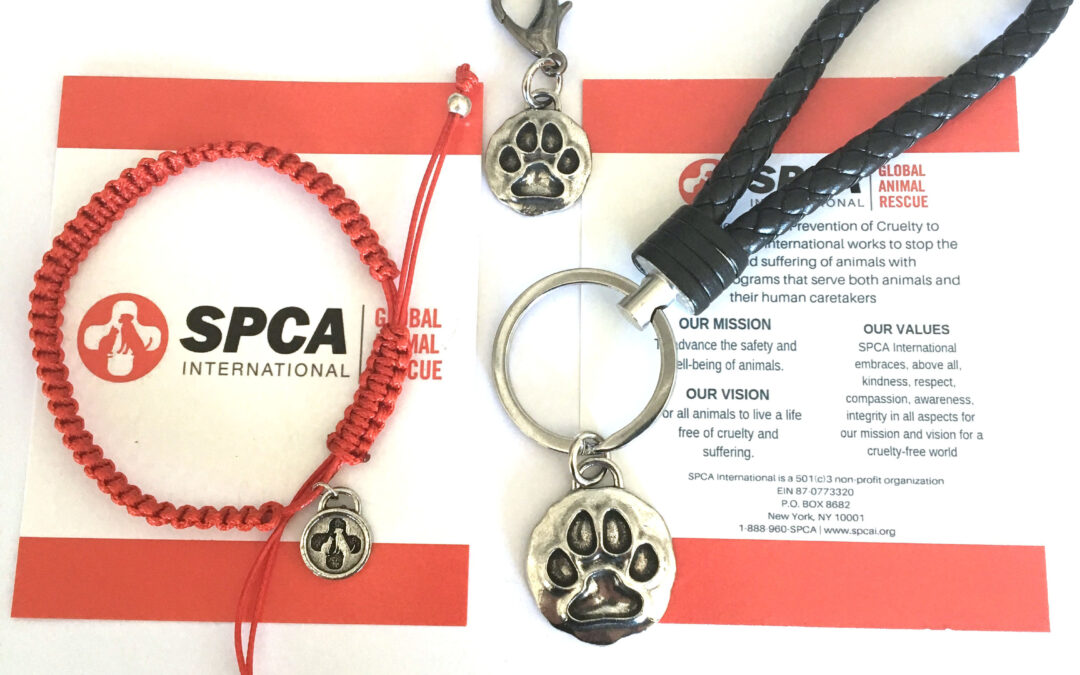 An Animal Love Story: SPCA International